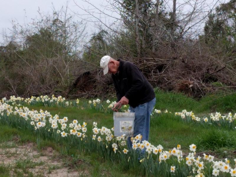 John Picking Blooms - 2016